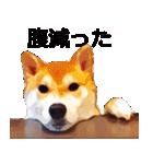しゃべる柴犬(日常会話編1)(個別スタンプ:22)