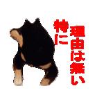 しゃべる柴犬(日常会話編1)(個別スタンプ:24)