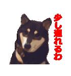 しゃべる柴犬(日常会話編1)(個別スタンプ:26)