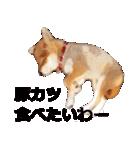しゃべる柴犬(日常会話編1)(個別スタンプ:30)