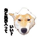 しゃべる柴犬(日常会話編1)(個別スタンプ:40)