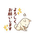 まいにち柴ちゃん(個別スタンプ:05)