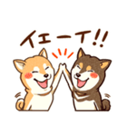 まいにち柴ちゃん(個別スタンプ:16)
