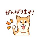 まいにち柴ちゃん(個別スタンプ:28)