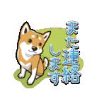 柴犬大好きスタンプ(個別スタンプ:16)