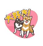 柴犬大好きスタンプ(個別スタンプ:20)