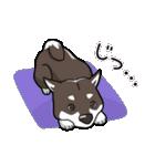 柴犬大好きスタンプ(個別スタンプ:25)