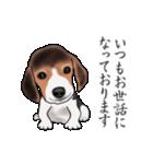 動く!ビーグル犬(個別スタンプ:3)