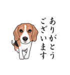 動く!ビーグル犬(個別スタンプ:4)