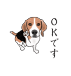 動く!ビーグル犬(個別スタンプ:5)