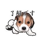 動く!ビーグル犬(個別スタンプ:6)