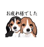 動く!ビーグル犬(個別スタンプ:7)