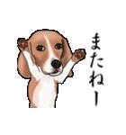 動く!ビーグル犬(個別スタンプ:8)