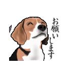 動く!ビーグル犬(個別スタンプ:9)
