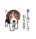 動く!ビーグル犬(個別スタンプ:10)