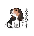 動く!ビーグル犬(個別スタンプ:12)
