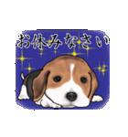 動く!ビーグル犬(個別スタンプ:15)