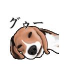 動く!ビーグル犬(個別スタンプ:16)