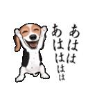 動く!ビーグル犬(個別スタンプ:17)