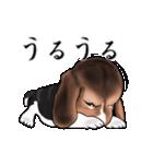 動く!ビーグル犬(個別スタンプ:18)