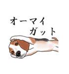 動く!ビーグル犬(個別スタンプ:20)