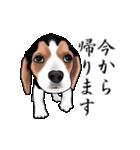 動く!ビーグル犬(個別スタンプ:21)