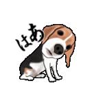 動く!ビーグル犬(個別スタンプ:22)