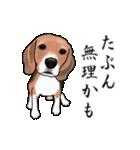 動く!ビーグル犬(個別スタンプ:24)