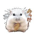 ハムスター☆だいふく ver.3(個別スタンプ:01)