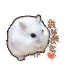 ハムスター☆だいふく ver.3(個別スタンプ:02)