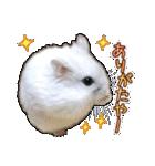 ハムスター☆だいふく ver.3(個別スタンプ:03)