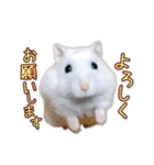 ハムスター☆だいふく ver.3(個別スタンプ:04)
