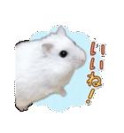 ハムスター☆だいふく ver.3(個別スタンプ:05)
