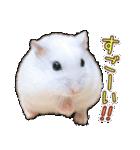 ハムスター☆だいふく ver.3(個別スタンプ:06)