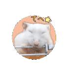ハムスター☆だいふく ver.3(個別スタンプ:08)