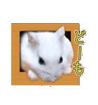 ハムスター☆だいふく ver.3(個別スタンプ:09)