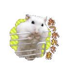 ハムスター☆だいふく ver.3(個別スタンプ:10)