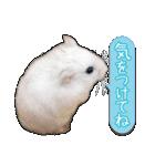 ハムスター☆だいふく ver.3(個別スタンプ:11)