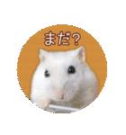 ハムスター☆だいふく ver.3(個別スタンプ:12)