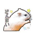 ハムスター☆だいふく ver.3(個別スタンプ:13)