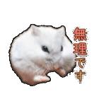 ハムスター☆だいふく ver.3(個別スタンプ:15)