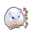ハムスター☆だいふく ver.3(個別スタンプ:16)