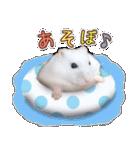 ハムスター☆だいふく ver.3(個別スタンプ:17)