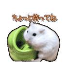 ハムスター☆だいふく ver.3(個別スタンプ:20)