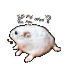 ハムスター☆だいふく ver.3(個別スタンプ:22)