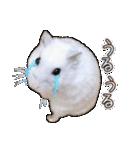 ハムスター☆だいふく ver.3(個別スタンプ:24)