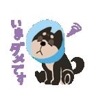 BARON BUDDIES 22 柴犬(個別スタンプ:22)