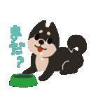 BARON BUDDIES 22 柴犬(個別スタンプ:31)