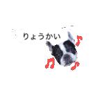 吹き出しフレンチブルドッグのココ(個別スタンプ:01)