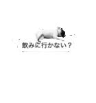 吹き出しフレンチブルドッグのココ(個別スタンプ:09)